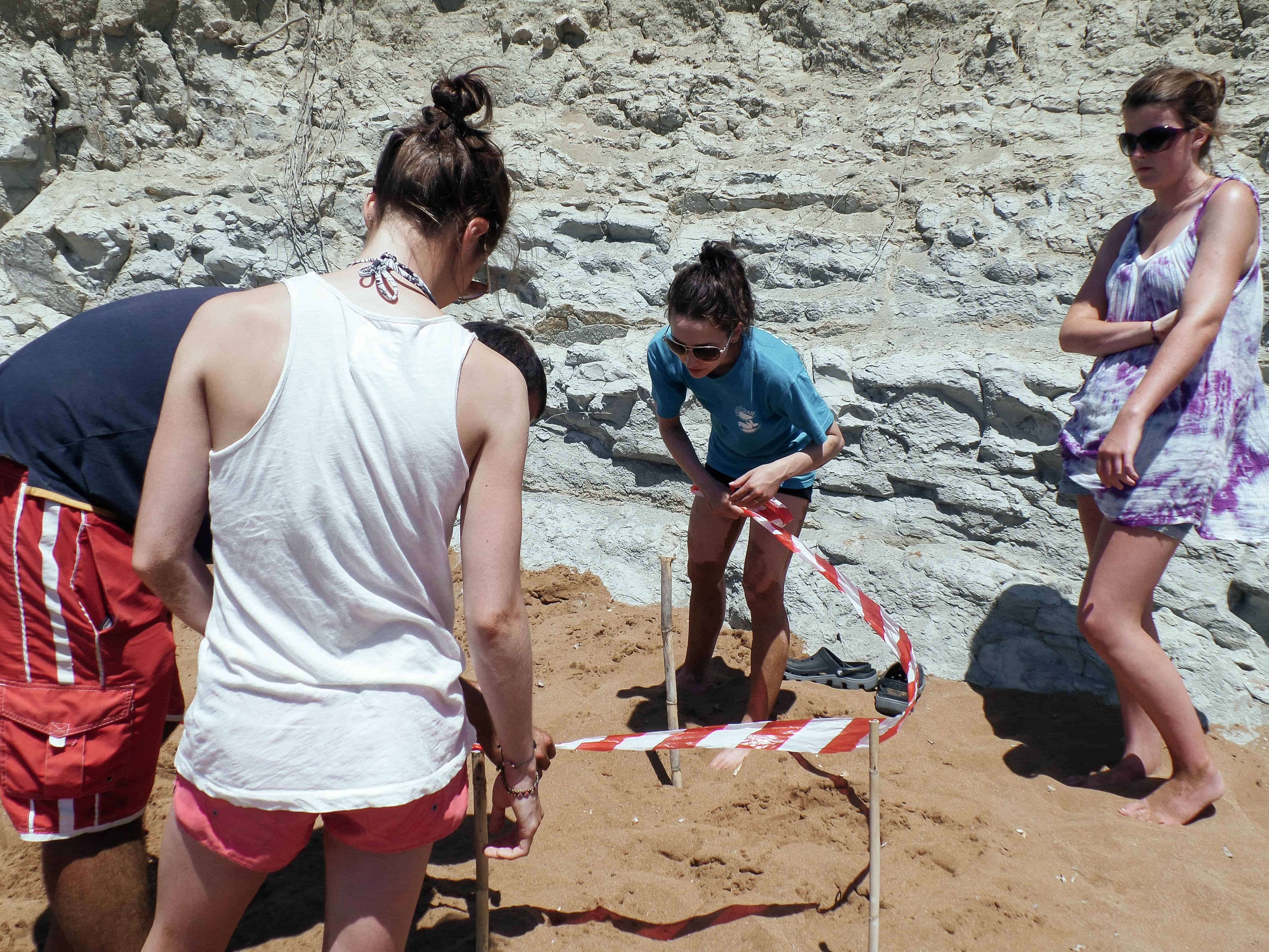 Sectioning off a sea turtle nest